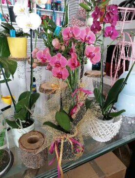 Pastel Renk İthal Orkide