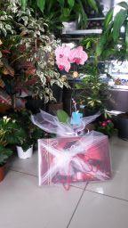 Orkide Ve Hediyelik Çikolata