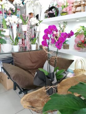 Özel Çift Dal Orkide (Kopya)