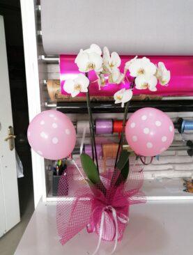 Doğuma Özel Çift Dal Orkide