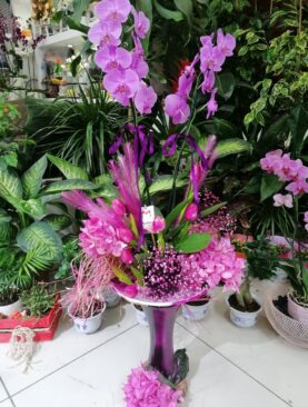 Dekoratif Orkide Aranjmanı